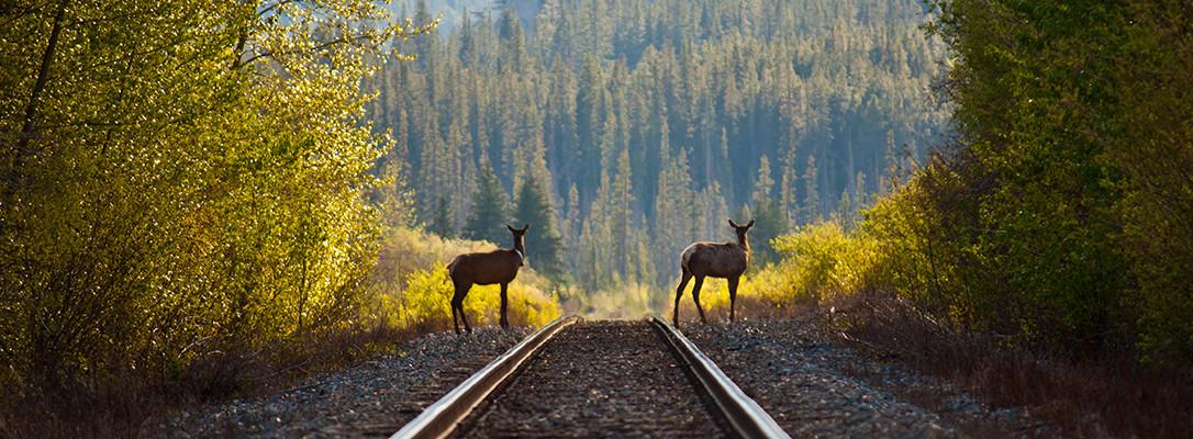 Canadian Rockies Major Attractions