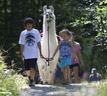stowe llama trekking